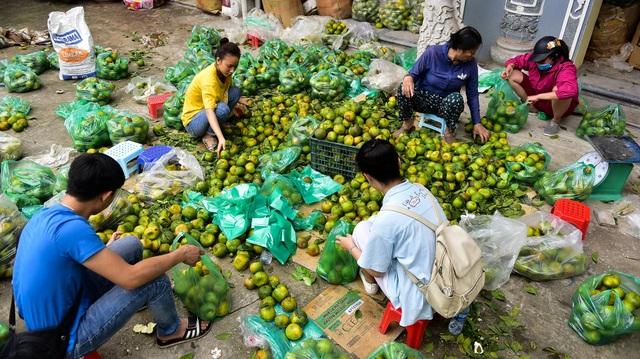 Dân Thủ đô giải cứu quýt sạch cho nông dân Nghệ An - 2