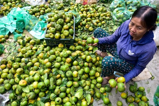 Dân Thủ đô giải cứu quýt sạch cho nông dân Nghệ An - 4