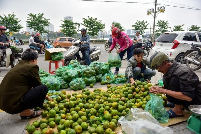 Dân Thủ đô giải cứu quýt sạch cho nông dân Nghệ An - 1