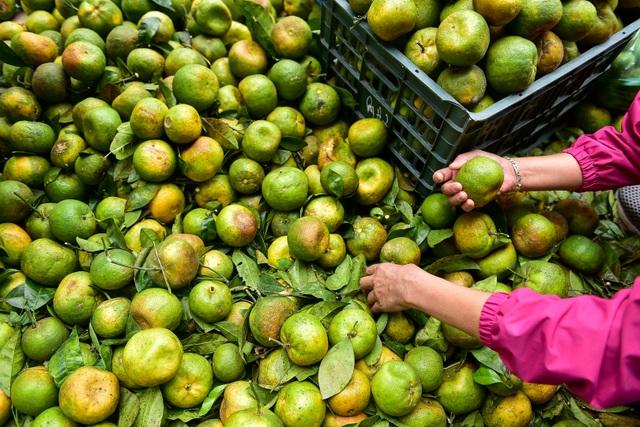 Dân Thủ đô giải cứu quýt sạch cho nông dân Nghệ An - 5
