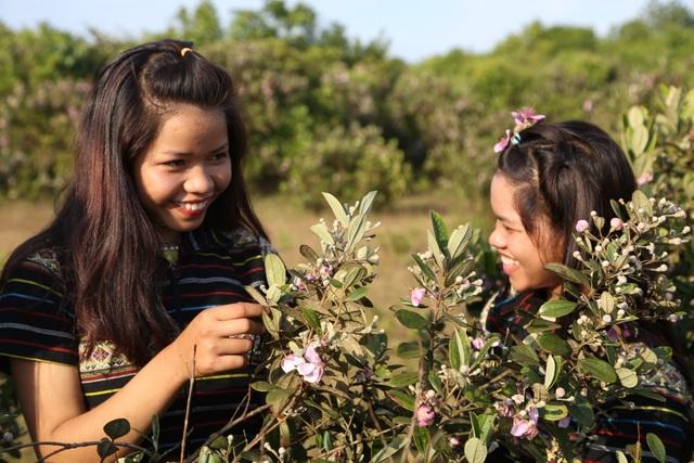 Quảng Ngãi: Hoa sim nở tím một góc trời trên thảo nguyên Bùi Hui - 5