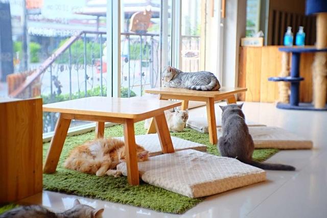 Mèo có thực sự nhận thức được tên mà chủ nhân đặt cho mình? - 3