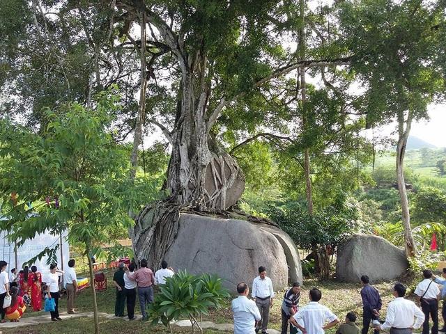 Kỳ lạ những cây cổ thụ được xem như báu vật, trả tiền tỷ cũng không bán - 8
