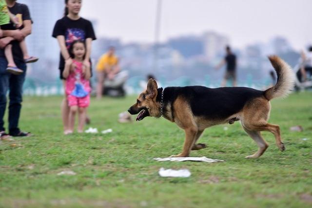 Nhiều người dân Hà Nội quen thả rông chó không rọ mõm - 11
