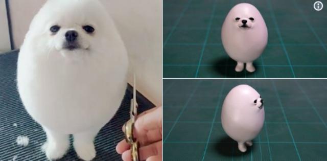 Chú chó hình quả trứng Pom Pom khiến dân mạng phát cuồng - 2