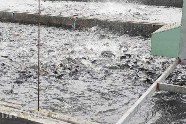 """Vứt 80 tỷ xuống """"sông cá"""", bắt 1 lứa dân cả tỉnh ăn không hết - 4"""