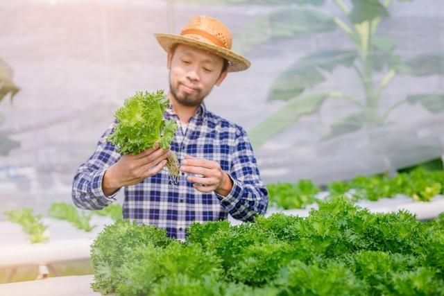 Nhiều người dân thành thị chọn cho mình lối sống xanh 100% - 1