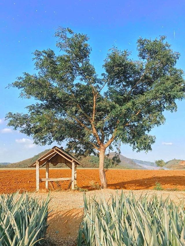 """Check-in cánh đồng dứa đẹp hút mắt, khiến dân phượt phát """"sốt"""" ở Ninh Bình - 8"""