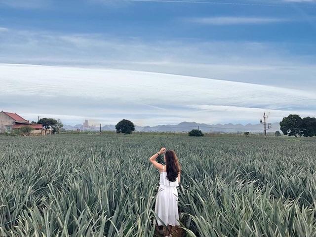 """Check-in cánh đồng dứa đẹp hút mắt, khiến dân phượt phát """"sốt"""" ở Ninh Bình - 5"""