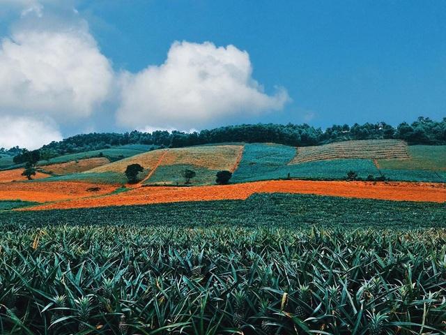 """Check-in cánh đồng dứa đẹp hút mắt, khiến dân phượt phát """"sốt"""" ở Ninh Bình - 4"""