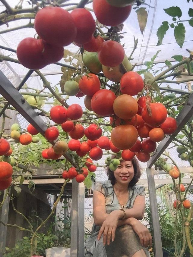 Trồng 8 gốc cà chua trên sân thượng, mẹ đảm Hà Nội thu 30kg/vụ - 8
