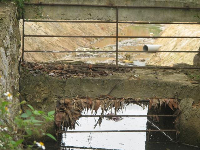 Nghệ An: Trang trại lợn công nghệ cao bức tử môi trường, dân yêu cầu dừng hoạt động - 7