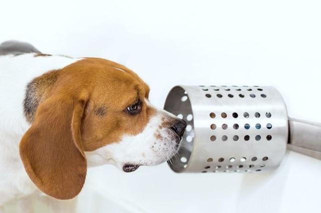 Chó có thể đánh hơi ung thư trong máu chính xác tới 97% - 1