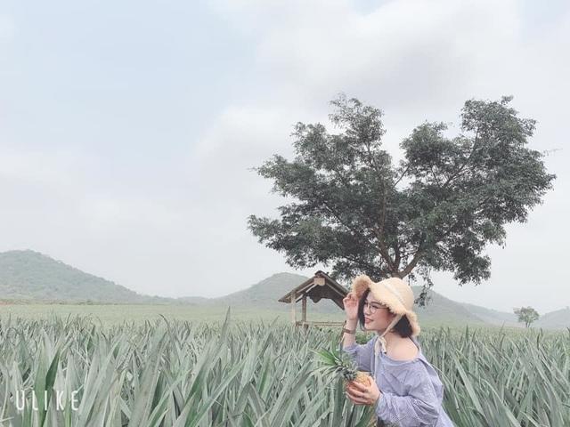 """Check-in cánh đồng dứa đẹp hút mắt, khiến dân phượt phát """"sốt"""" ở Ninh Bình - 2"""