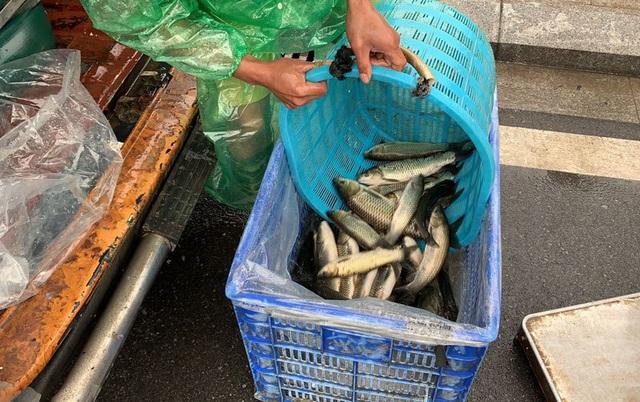 Khu dân cư đại gia: Mấy trăm triệu mua 2 tấn cá phóng sinh xuống hồ - 5