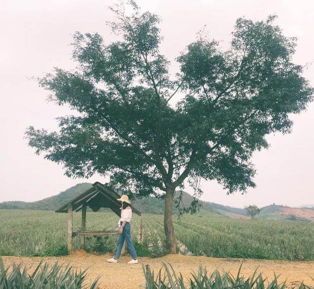 """Check-in cánh đồng dứa đẹp hút mắt, khiến dân phượt phát """"sốt"""" ở Ninh Bình - 1"""