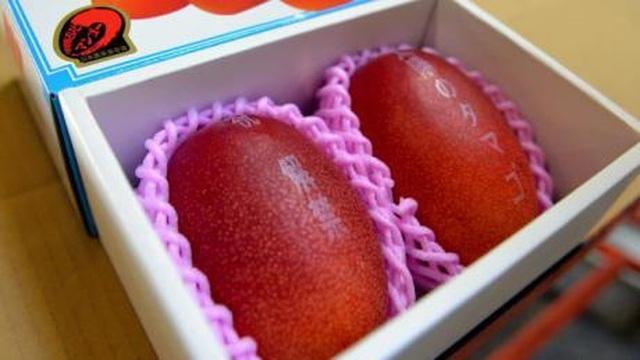 """Siêu phẩm cặp xoài """"trứng mặt trời"""" có giá hơn 100 triệu đồng - 2"""