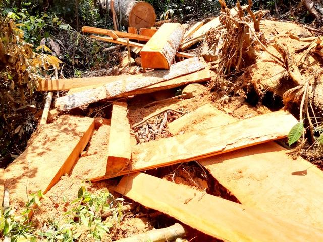 Phá rừng phòng hộ Đắk Mi