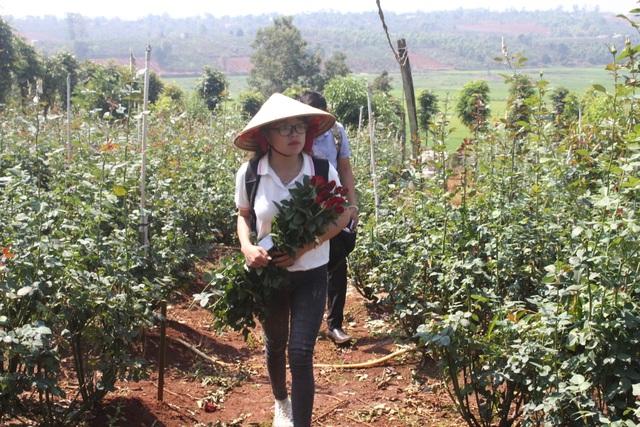 Thanh niên 9X trồng hoa hồng xứ Bắc trên phố núi, thu hàng trăm triệu đồng mỗi năm - 4