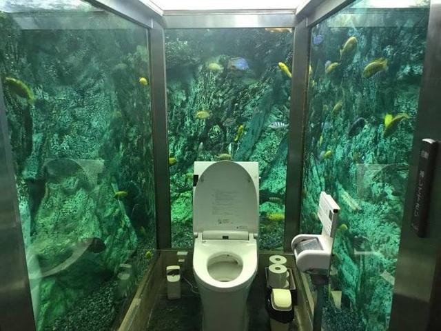 Đi vệ sinh giữa thủy cung với đàn cá nhiều màu bơi lội xung quanh - 2