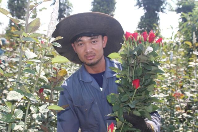 Thanh niên 9X trồng hoa hồng xứ Bắc trên phố núi, thu hàng trăm triệu đồng mỗi năm - 1