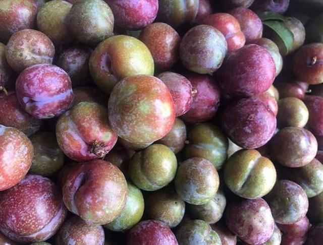 Đắt gấp đôi hàng ngoại, mận Việt chua chát 300 ngàn đồng/kg vẫn cháy hàng - 2