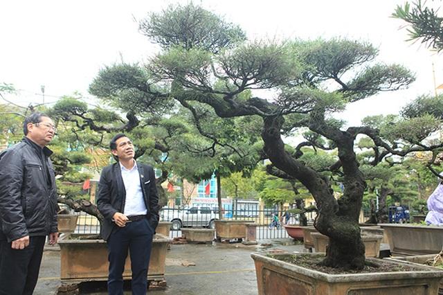Ra tay giải cứu hàng chục cụ cây, người đàn ông có ngay vườn bonsai triệu đô - 1