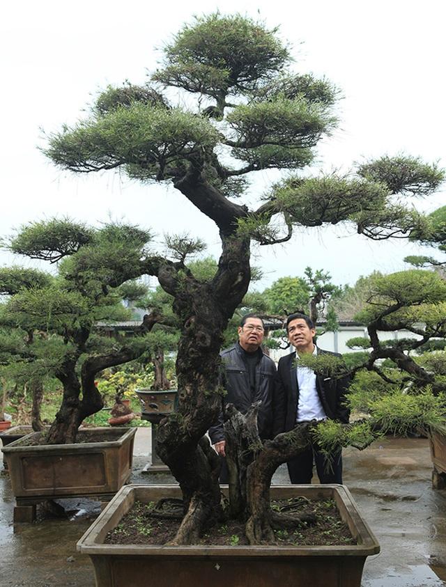 Ra tay giải cứu hàng chục cụ cây, người đàn ông có ngay vườn bonsai triệu đô - 11