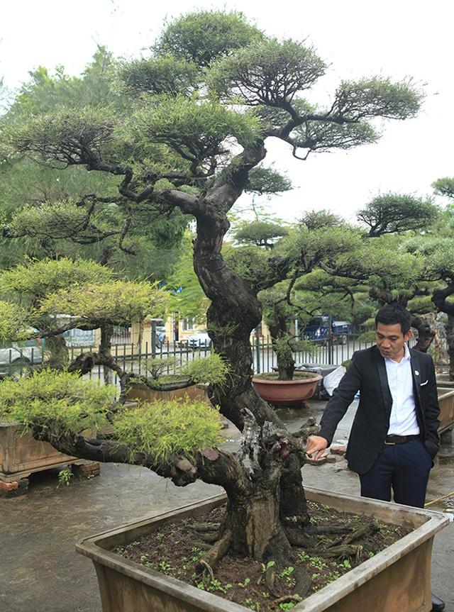 Ra tay giải cứu hàng chục cụ cây, người đàn ông có ngay vườn bonsai triệu đô - 12