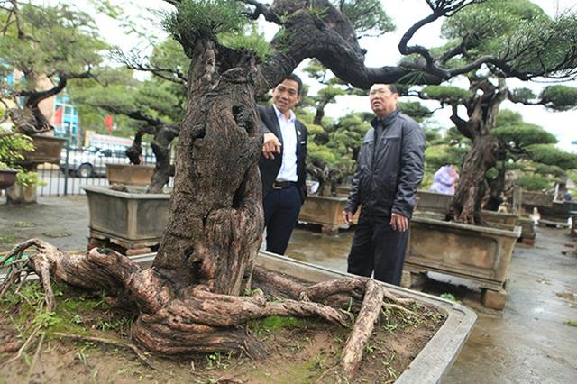 Ra tay giải cứu hàng chục cụ cây, người đàn ông có ngay vườn bonsai triệu đô - 2