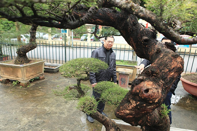 Ra tay giải cứu hàng chục cụ cây, người đàn ông có ngay vườn bonsai triệu đô - 6