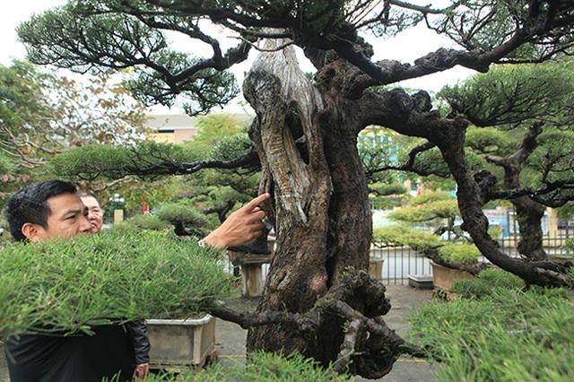Ra tay giải cứu hàng chục cụ cây, người đàn ông có ngay vườn bonsai triệu đô - 8