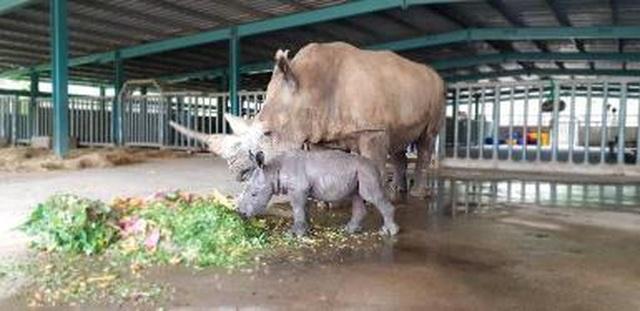 """Liên tiếp thú hiếm sinh nở tại """"ngôi nhà động vật năm châu"""" Vinpearl Safari - 3"""