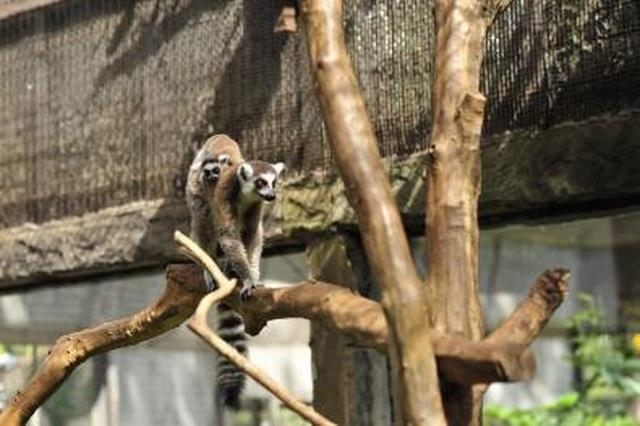 """Liên tiếp thú hiếm sinh nở tại """"ngôi nhà động vật năm châu"""" Vinpearl Safari - 4"""