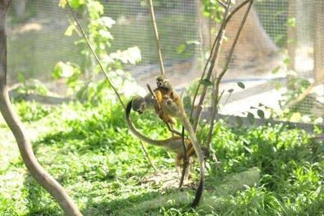 """Liên tiếp thú hiếm sinh nở tại """"ngôi nhà động vật năm châu"""" Vinpearl Safari - 7"""