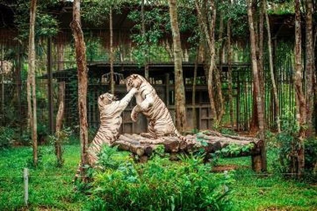 """Liên tiếp thú hiếm sinh nở tại """"ngôi nhà động vật năm châu"""" Vinpearl Safari - 8"""