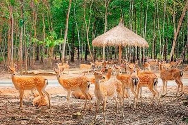 """Liên tiếp thú hiếm sinh nở tại """"ngôi nhà động vật năm châu"""" Vinpearl Safari - 9"""