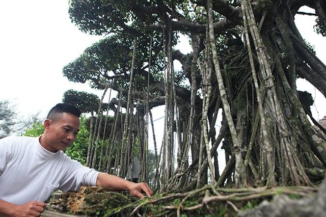 Dành cả thanh xuân tạo tác cây sanh cổ, kết quả thu được khiến ai cũng mê - 3
