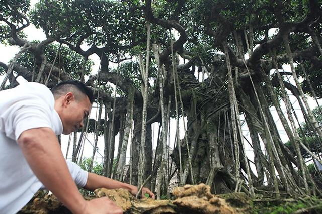 Dành cả thanh xuân tạo tác cây sanh cổ, kết quả thu được khiến ai cũng mê - 4