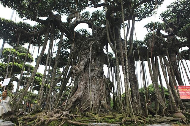 Dành cả thanh xuân tạo tác cây sanh cổ, kết quả thu được khiến ai cũng mê - 9