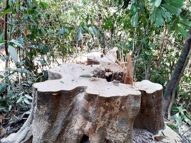 Phá rừng phòng hộ Sông Tranh