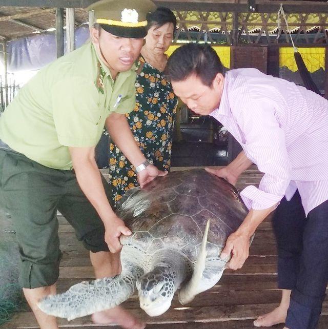 Bắt được rùa biển quý hiếm nặng 40kg - 2