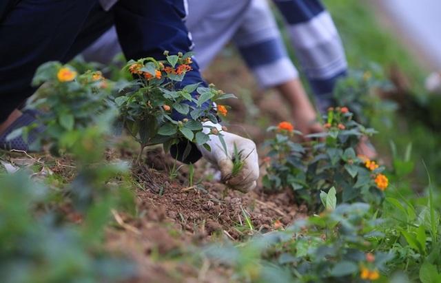 Kênh ngập rác thải biến thành đường hoa ở Hà Nội - 4