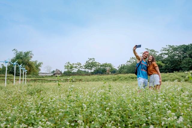 Mãn nhãn vườn hoa tam giác mạch gần 1 héc ta ở Hà Nội hút khách tham quan - 8