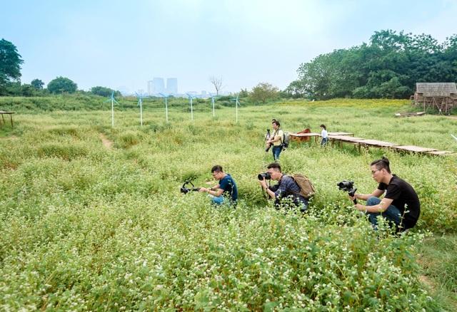 Mãn nhãn vườn hoa tam giác mạch gần 1 héc ta ở Hà Nội hút khách tham quan - 11