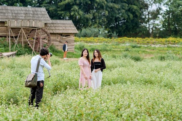 Mãn nhãn vườn hoa tam giác mạch gần 1 héc ta ở Hà Nội hút khách tham quan - 6