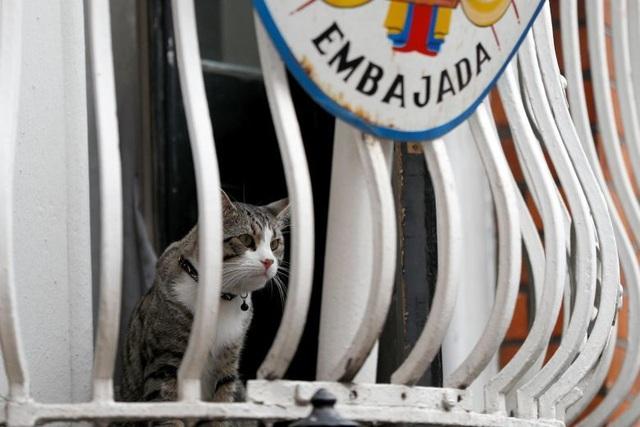 Bí ẩn tung tích mèo cưng của ông chủ WikiLeaks - 2