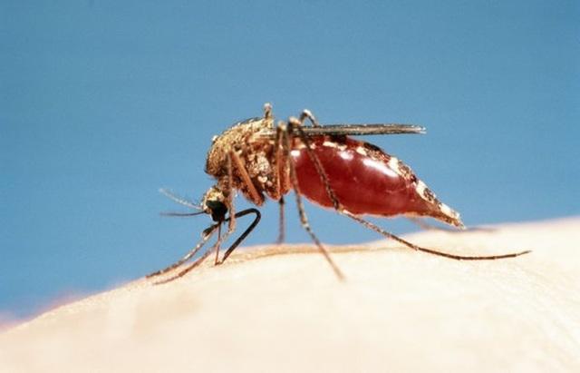 """Tại sao Iceland là """"vùng đất chết"""" của loài muỗi? - 1"""