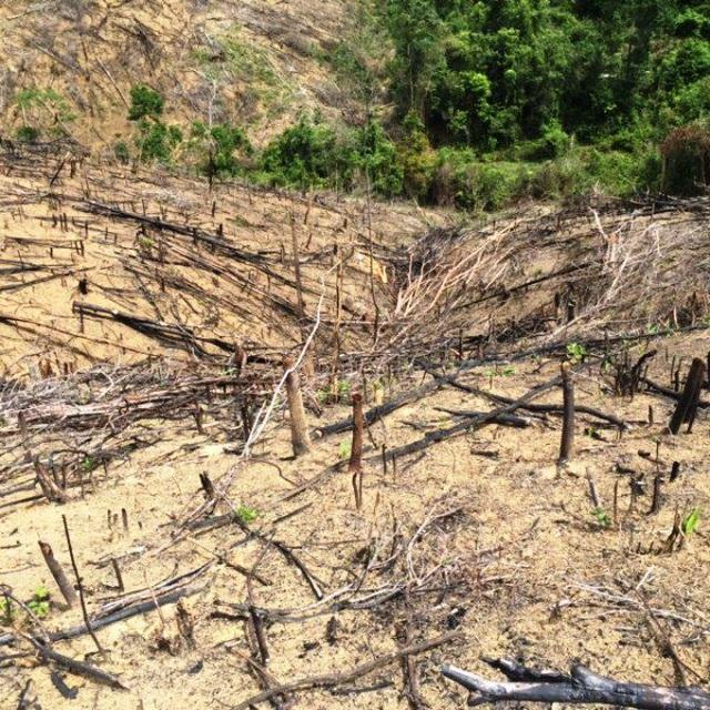 Khởi tố 2 cha con chặt phá 11.300 m2 rừng tự nhiên - 1