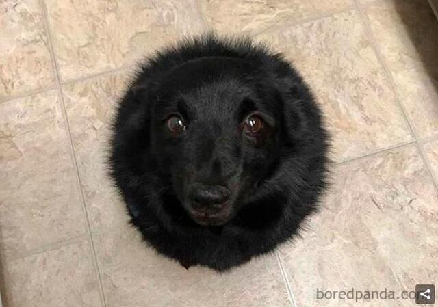 Chết cười với phản ứng của cộng đồng mạng khi lần đầu nhìn thấy Hố đen! - 4